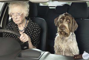 бабушка и собака
